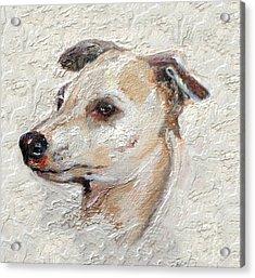 Italian Greyhound Acrylic Print by Enzie Shahmiri