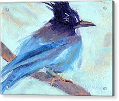 Jay To The Right Acrylic Print by Cheryl Whitehall