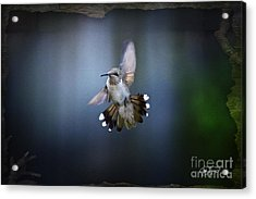 Jet Fighter Acrylic Print by Cris Hayes