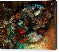 Jezebel Acrylic Print by Janet Kearns