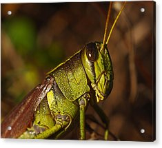Jiminy Cricket Never Looked This Good Acrylic Print by Billy  Griffis Jr