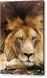 Joseph Acrylic Print by Big Cat Rescue