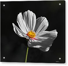 Just A Flower Acrylic Print by Mitch Shindelbower