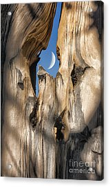 Just Passing By Acrylic Print by Sandra Bronstein