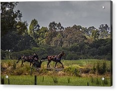 Keeping Pace Acrylic Print by Dave Kelly