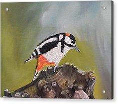 Kingfisher Acrylic Print by Usha Rai