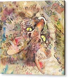 Kitty Fluffs Acrylic Print by Marilyn Sholin