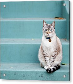 Kitty On Blue Steps Acrylic Print by Lauren Rosenbaum