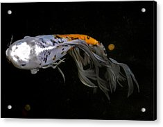Koi And Coins Acrylic Print by Kirsten Giving