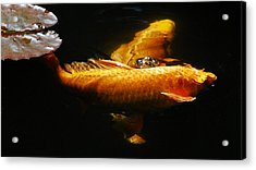 Koi Crossing Acrylic Print by Don Mann