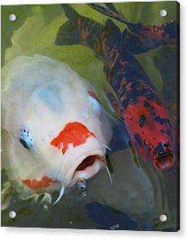 Koi Fish #1 Acrylic Print by Todd Sherlock