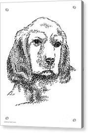 Labrador-portrait-drawing Acrylic Print by Gordon Punt