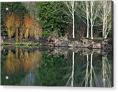 Lakeside Plants Acrylic Print by Dr Keith Wheeler