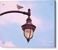 Lampost Gull   Two Acrylic Print by Judy Via-Wolff