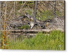 Landing Gear Down Acrylic Print by Charles Warren