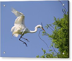 Landing Gear Down Acrylic Print by Paulette Thomas