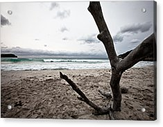 Large Piece Of Driftwood On A Beach On An Overcast Day Acrylic Print by Anya Brewley schultheiss