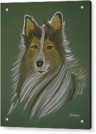 Lassie Acrylic Print by Sandra Frosst