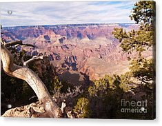 Late Afternoon At The South Rim Acrylic Print by Bob and Nancy Kendrick