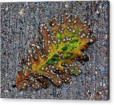 Leaf On The Sidewalk Acrylic Print by Robert Ullmann