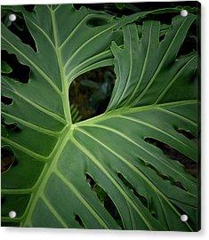 Leaf With Empty Space Acrylic Print by David Coblitz
