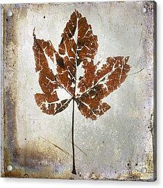 Leaf  With Textured Effect Acrylic Print by Bernard Jaubert