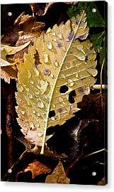 Leafy Tears Acrylic Print by Burney Lieberman