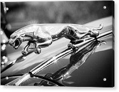 Leaping Jaguar Acrylic Print by Sebastian Musial