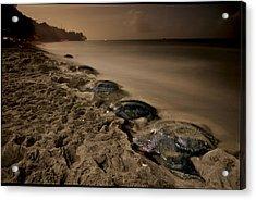 Leatherback Turtles Nesting On Grande Acrylic Print by Brian J. Skerry