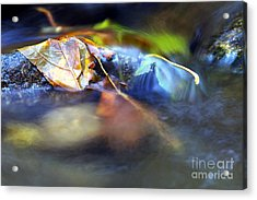 Leaves On Rock In Stream Acrylic Print by Sharon Talson