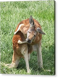 Let Me Grab My Wallet Acrylic Print by Heather Jett