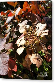 Light As Paper Acrylic Print by Trish Hale