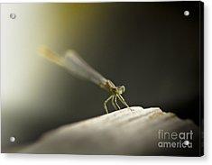 Like An Angel Acrylic Print by Kim Henderson