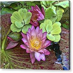 Lilies No. 21 Acrylic Print by Anne Klar