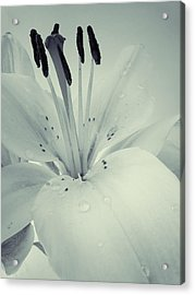Lily Acrylic Print by Sarah Couzens