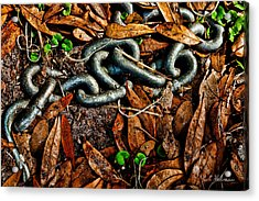 Links And Leaves Acrylic Print by Christopher Holmes
