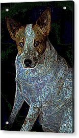 Little Blue Acrylic Print by One Rude Dawg Orcutt