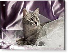 Little Cat On Lilac Acrylic Print by Raffaella Lunelli