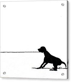 Little Dogs Doing Tricks On Little Canvas Acrylic Print by Cindy D Chinn