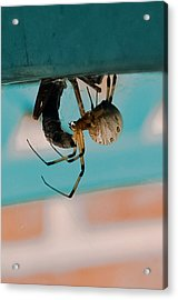 Little Miss Venom Acrylic Print by DigiArt Diaries by Vicky B Fuller