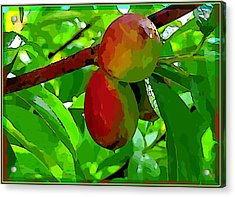 Little Peaches Acrylic Print by Mindy Newman