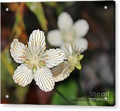 Little Wildflower Acrylic Print by Laurinda Bowling