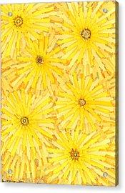 Loire Sunflowers One Acrylic Print by Jason Messinger