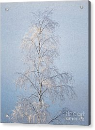 Lone And Slender Acrylic Print by Ari Salmela