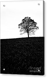 Lone Tree Black And White Silhouette Acrylic Print by John Farnan