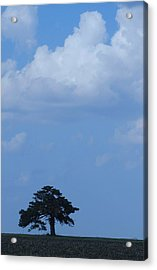 Lonely Tree #2 Acrylic Print by Todd Sherlock