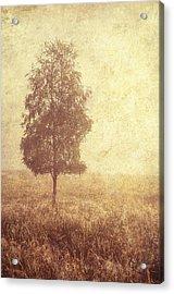 Lonely Tree. Trossachs National Park. Scotland Acrylic Print by Jenny Rainbow