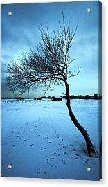Lonely Winter Tree Acrylic Print by Svetlana Sewell
