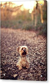 Long Hair Puppy Acrylic Print by Someone bought my images.