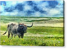 Longhorn Prarie Acrylic Print by Jeff Kolker